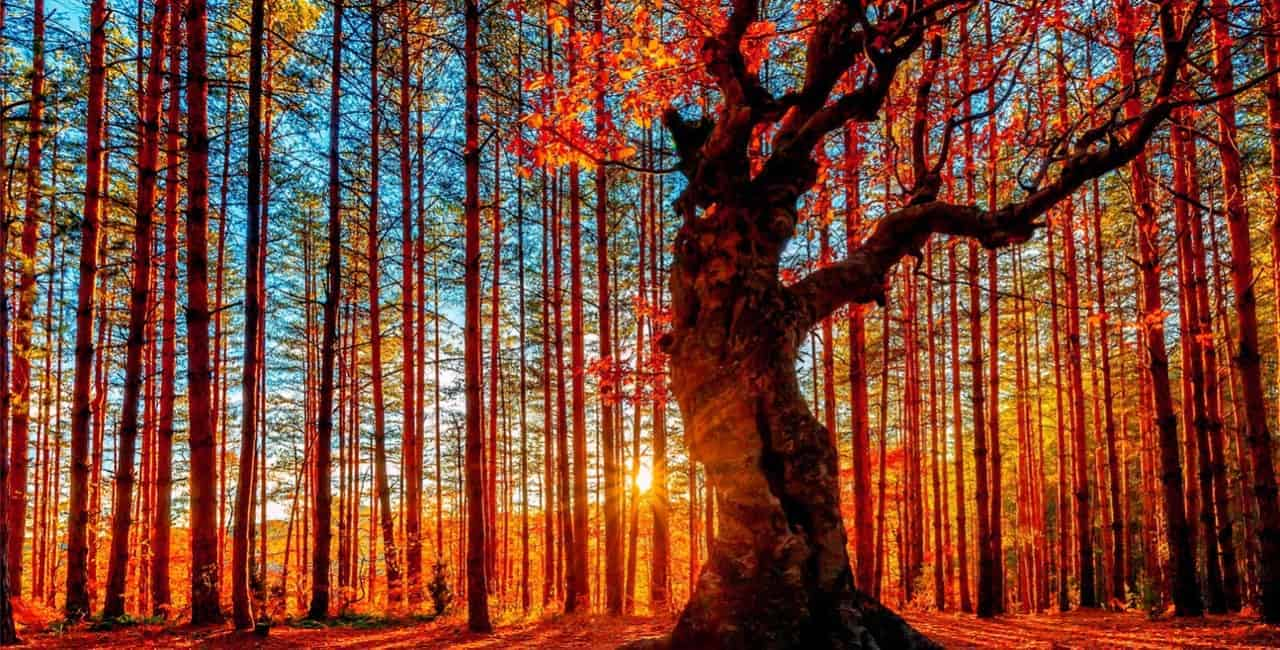 Spirit Matters | Forgiving Ourselves